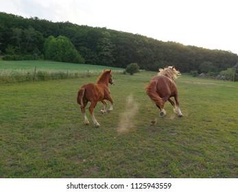 Running away of horses