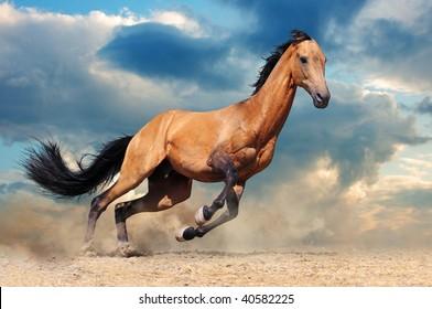 Running bay horse against blue sky
