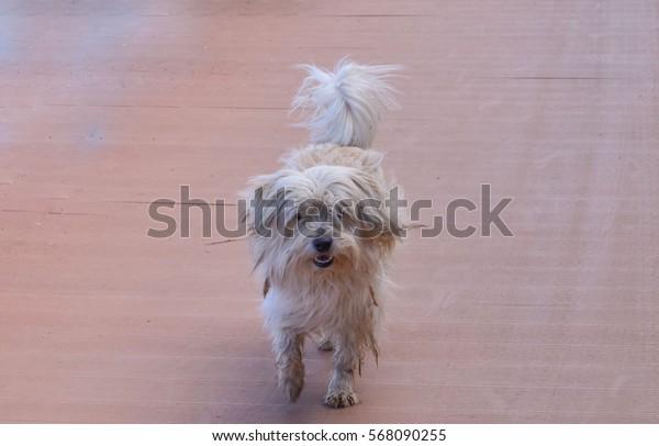 Running dog.