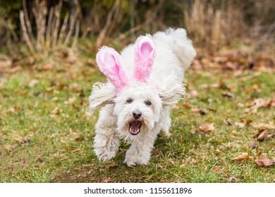 Running dog bunny ears