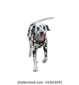 running dog -- isolated on white background