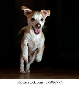 Running dog on a dark background