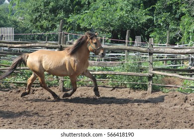 Running horse in corral