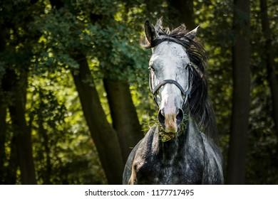 Running horse in forest - Shutterstock ID 1177717495