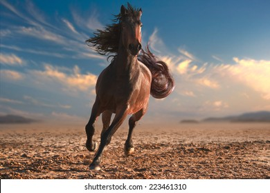 Running horse with streamed mane. Sunset time and sand