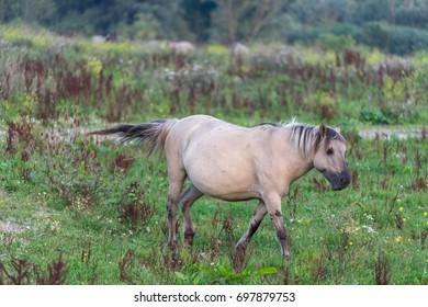 Running horse in the wild.