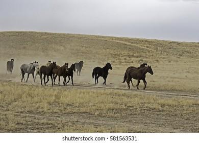 Running Horses in Desert
