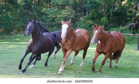 Running Horses Field