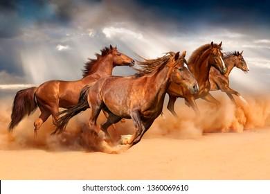 Horse Wallpaper Images Stock Photos Vectors Shutterstock