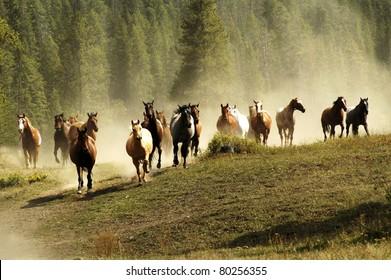 Running horses on Montana ranch