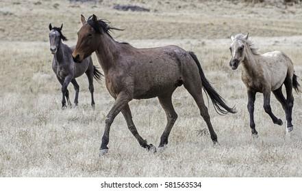 Running Horses in Utah Desert