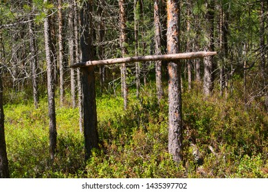 Running pole for a sable trap set by a trapper in Siberian taiga forest