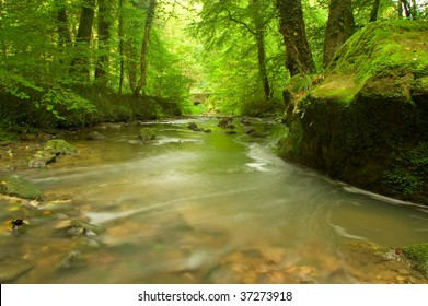 Running river in the lush green forest