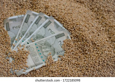Rupaye banknotes and wheat grains. Minimum support prise, Agriculture business, Crop loan and Agricultural income concept. - Shutterstock ID 1722185098