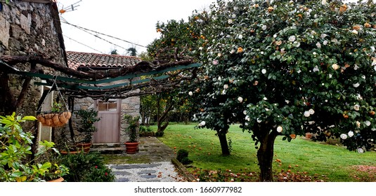 Rural architecture with different trees, magnolia, orange and lemon tree in Paderne, Galicia by Fermín Tamames
