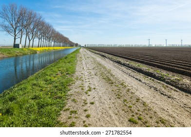 Rural area on a sunny day in spring with newly sown potatoes in long ridges and a row of bare trees reflected in the water of a canal with flowering yellow charlock on the waterfront.