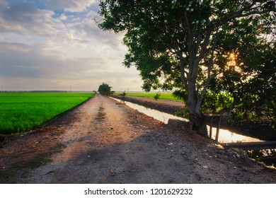 Rural area over sunrise background surrounding with beautiful landscape of green paddy rice field