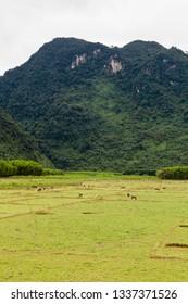 Rural areas around the Phong Nha city, Vietnam