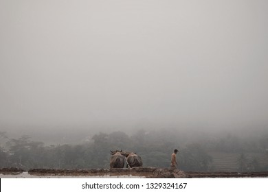 rural atmosphere in the morning