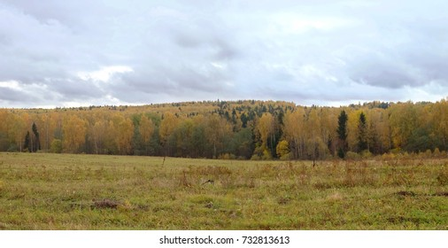 Rural autumn landscape with yellow leaves on the trees in the far forest under gray sky in cloudy day panoramic view