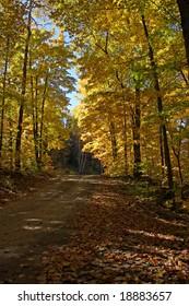 Rural Autumn road.