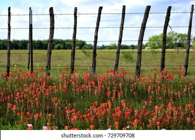 Rural background with red paintbrush flowers and old fashion barbwire fence, Texas country