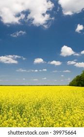 Rural background with yellow flower field and blue sky with clouds