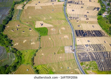 Rural Balinese fields, rice terraces. Flat view from above. South west part of Bali, Indonesia