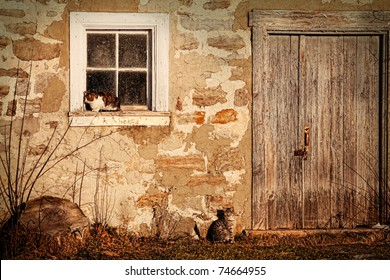 Rural barn with cats laying in the sun