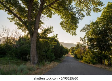 rural California road lined with trees