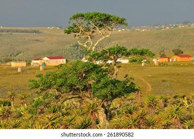 Rural Ciskei landscape