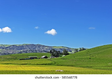 Rural coastal hills / mountains, blue sky, white clouds, green fields / grass, barn, power lines, yellow flowers, & farm on the Big Sur coast, California Central Coast, near Cambria CA.