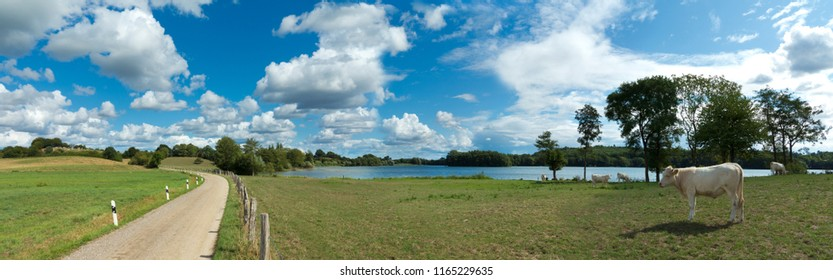 rural countryside landscape with lake, country road, moody sky with clouds and charolais cattle