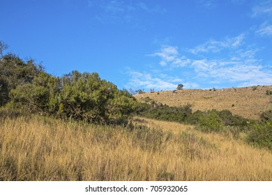 Rural dry winter vegetation hills and valleys against blue cloudy sky wilderness landscape in South Africa