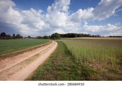 Rural dutch landscape