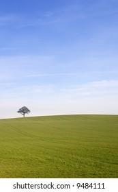 Rural english winter landscape of a single tree on the horizon beneath a blue sky