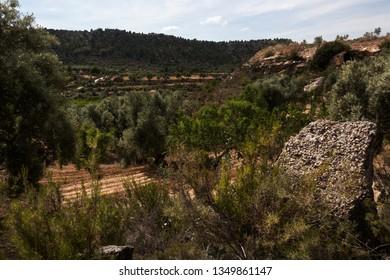 Rural escene. Teruel province. Spain