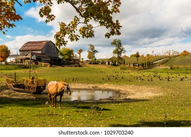 Rural Farm featuring horses, green pasture and barn on the background