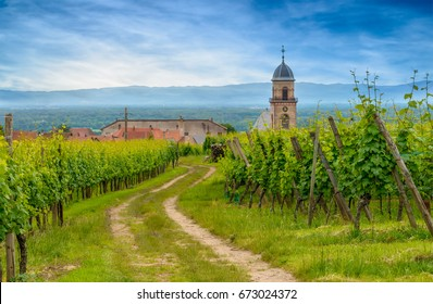 Rural farm track meandering through a summer vineyard towards a distant town or village with church steeple in a scenic rural landscape