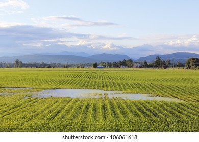 A rural field after a heavy downpour is saturated/Saturated Farmer's Field/Heavy rain has saturated a rural field