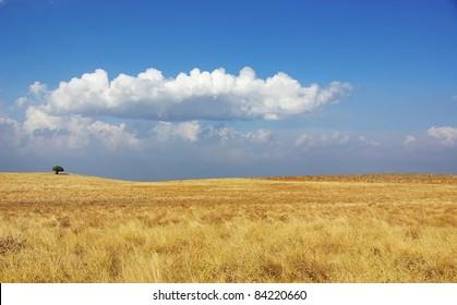 Rural field at Alentejo region, Portugal.