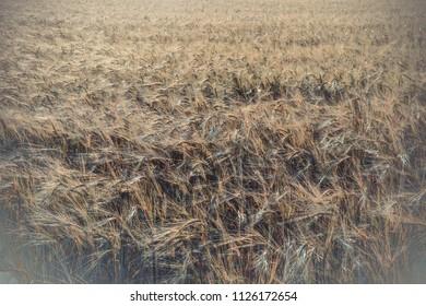 Rural field in Crimea