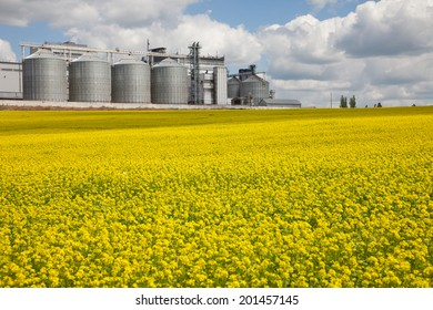 Rural field with flowers on a background of rape granary on the farm