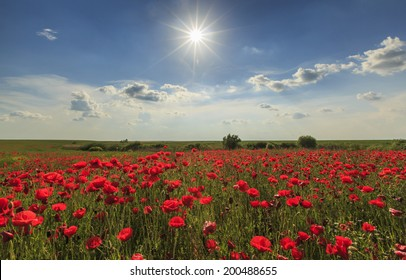 Rural fields of wild poppies on a sunny summer day