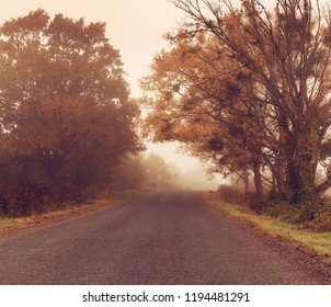 Rural foggy autumn landscape with car road and red trees. Seasonal fall silence mood.
