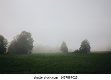 Rural foggy landscape with green grass meadow and trees during misty morning