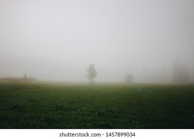 Rural foggy landscape with green grass meadow during misty morning