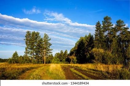 Rural forest road landscape. Forrest road landscape. Rural road in forest. Forest road landscape