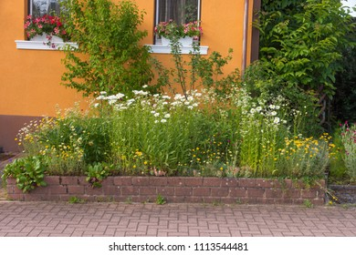 Rural front yard with native plants and flowers
