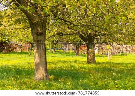 Rural Garden Flowers Meadow Fruit Trees Stock Photo (Edit Now ...